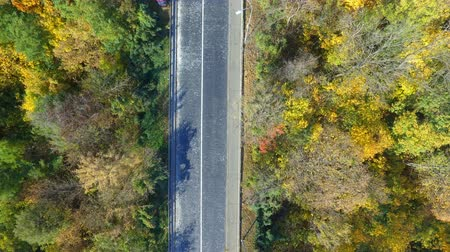 altura : Overhead aerial top view over car travelling through colorful forest