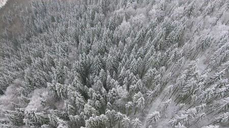 felling : Flying around a frozen very beautiful tree. Winter tale. Landscape to admire. Stock Footage