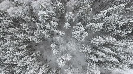 very : Flying around a frozen very beautiful trees. Winter tale. Landscape to admire