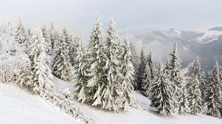coldness : mountains in winter. Rural pezazh. Trees covered with snow. Happy New Year