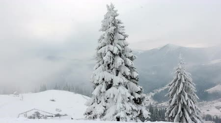 superb : frozen very beautiful trees. Winter tale. Landscape to admire. superb mountains