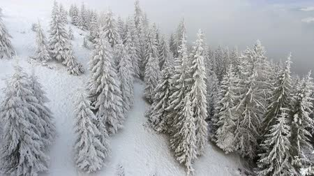 felling : frozen very beautiful trees. Winter tale. Landscape to admire. superb mountains