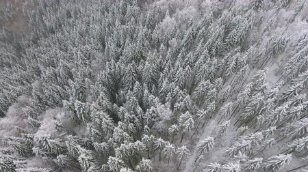 freeride : frozen very beautiful trees. Winter tale. Landscape to admire. superb mountains