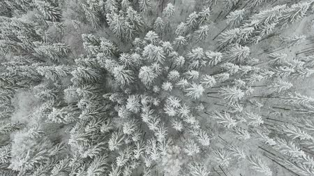 luty : frozen very beautiful trees. Winter tale. Landscape to admire. superb mountains