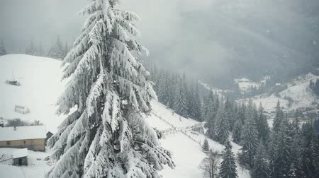 styczeń : mountains in winter. Rural landscape. Trees covered with snow. Happy New Year. frozen very beautiful trees. Winter tale.