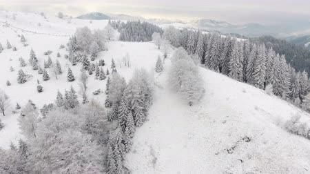 freeride : mountains in winter. Rural landscape. Trees covered with snow. Happy New Year. frozen very beautiful trees. Winter tale.