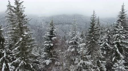 luty : Rural landscape. Happy New Year. frozen very beautiful trees. Winter tale. Wideo