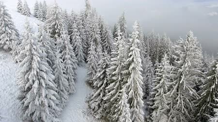 vysočina : Flying over a beautiful winter forest in the highlands