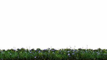 bushy : Linear Motion of a Wild Green Grass and White Speedwell Flowers Strip with Alpha Channel Stock Footage