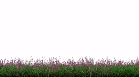 bushy : Linear Motion of a Wild Green Grass and Purple Stock Footage