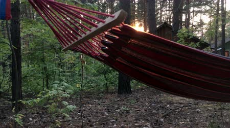 гамак : hammock hanging on a tree at sunset