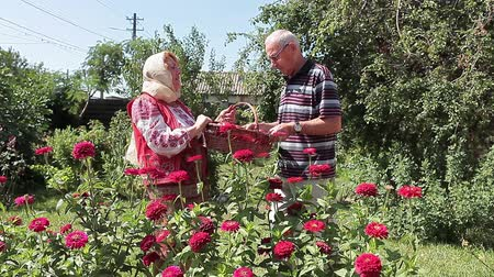 romanian traditional costume : Couple of Romanian retired people talking cheerfully in the garden. Shes keeping a basket full of fresh picked vegetables. Stock Footage