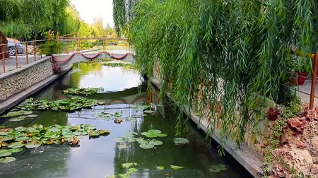 Small artificial canal covered by water lilies and flanked by hanging willows, with small bridge at the end, Neptun, Romania.