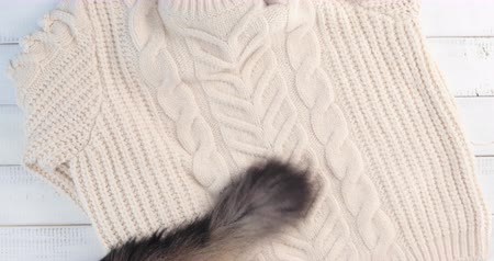 coon : Cat tail wagging slightly on a white wool sweater - Floor top view Stock Footage