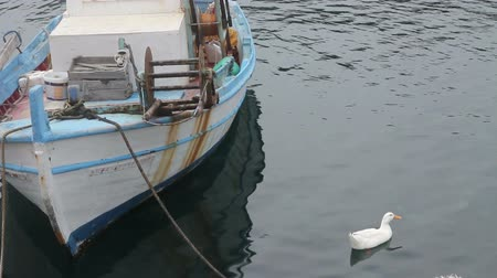 malia : fishing boat and goose in the bay of Crete
