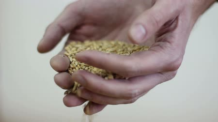 yulaf ezmesi : grain in the hands of a farmer