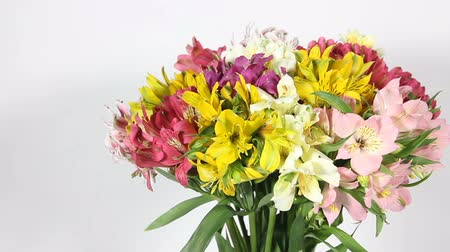 alstroemeria : colorful flowers bouquet of alstroemeria Stock Footage