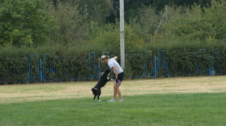 brindle : DNIPRO, UKRAINE - 2 SEPTEMBER, 2018: training border collie before the dog show on September 2, 2018 in Dnipro, Ukraine