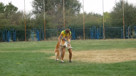 brindle : DNIPRO, UKRAINE - 2 SEPTEMBER, 2018: collie with frisbee on dog show on September 2, 2018 in Dnipro, Ukraine