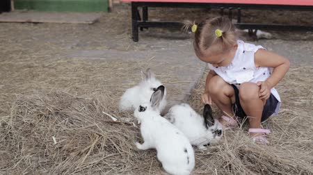 coelho : Cute little girl feeding rabbit from the hand