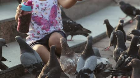 young sparrow : Little cute girl feeds pigeons near fountain Stock Footage