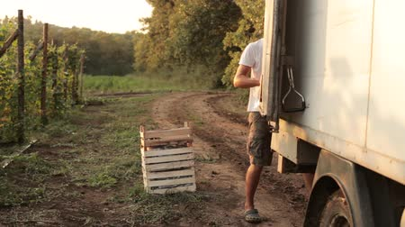chartered : Farmer shipping boxes with vegetables in the truck Stock Footage