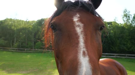 posou : Horse face close-up, backlight.