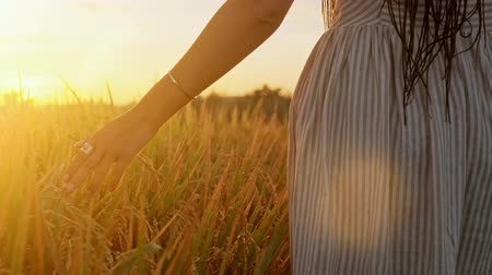 fragilidade : Womans hand touch young wheat ears at sunset or sunrise. Rural and natural scenery. country, nature, summer holidays, agriculture and people concept - close up of young woman hand touching field