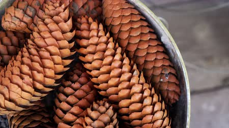 глыба : A lot of fir cones closeup in bucket spinning background 4K. Christmas cones with texture rotating street. Background from coniferous plants turning outdoor. Clear place for your isolated text pattern