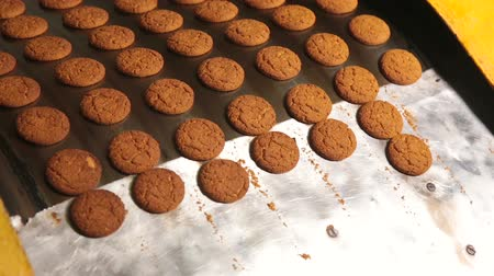 cracknel : Cookies leave the oven in the bakery. Freshly baked cookies. Oatmeal cookies are brown. Process of producing cookies. Stock Footage