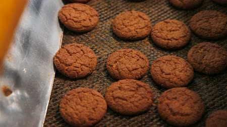 cracknel : Cookies are moving on the conveyor line. Oatmeal cookies are brown. Biscuits and gingerbreads on a conveyor belt in a bakery.