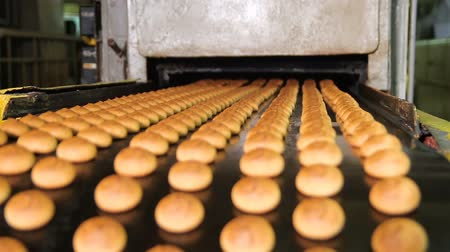 avelã : Fresh biscuits made in the factory.Cookies are moving on the conveyor line. Automatic line for the production of cookies. Biscuits and gingerbreads on a conveyor belt in a bakery. Stock Footage