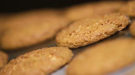 ships biscuit : Oatmeal cookies move along the conveyor belt close up. Cookies leave the oven in the bakery. Freshly baked cookies. Process of producing cookies.