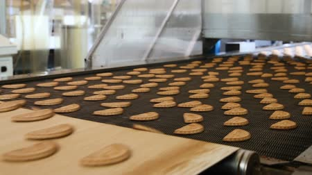 ships biscuit : Production line of baking cookies. Conveyor with cookies. Many sweet cake food factory. Freshly baked shortbread cookies leave the oven. Cookies on a conveyor in a confectionery factory oven.