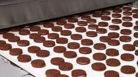ships biscuit : Cookies with cocoa chocolate brown taste on the conveyor belt in the bakery confectionery factory. Cocoa cookies from two layers with cream in the shop of the confectionery factory. Stock Footage