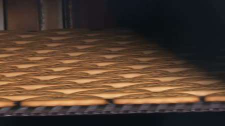 cereal product : Cookies on a conveyor in a confectionery factory oven. Cookie is baked in the oven. Close up. Production line of baking cookies, closeup. Cookie factory, food industry. Fabrication. Stock Footage