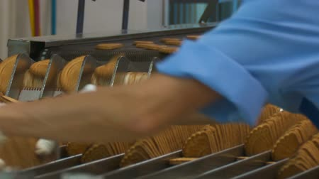 parlamento : Worker behind the conveyor in shop of confectionery factory. Worker at the conveyor sorts the cookies. An employee at a confectionery factory. Production line of baking cookies. Conveyor with cookies. Stok Video