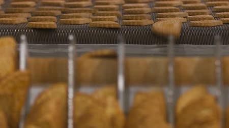 ships biscuit : Worker at the conveyor sorts the cookies. An employee at a confectionery factory. Worker behind the conveyor in shop of confectionery factory. Shallow depth of field. Close up.