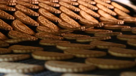 avelã : Cookies on a conveyor in a confectionery factory oven. Freshly baked shortbread cookies leave the oven. Stock Footage