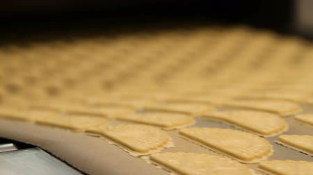 cracknel : Dough for baking cookies. Forming dough for biscuits. Conveyor belt with biscuits in a food factory - machinery equipment. Production line of baking cookies. Conveyor with cookies. Stock Footage