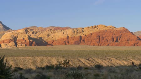 peyote : Red Rock Canyon Las Vegas Nevada, Panorama view. Cacti of the Desert of Nevada in the Red Rock Canyon. Dolly moving - Red Rock Canyon Nevada. Scenic Red rock canyon landscape. Stock Footage