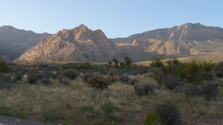 nevada : Red Rock Canyon Las Vegas Nevada, Panorama view. Cacti of the Desert of Nevada in the Red Rock Canyon. Dolly moving - Red Rock Canyon Nevada. Scenic Red rock canyon landscape. Stock Footage
