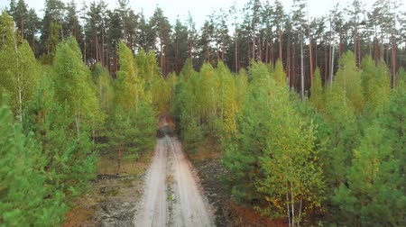 вести : Autumn forest, the path leading to the depth pine forest. Birch seedlings near tall conifers. Dirt sandy road with puddles leads into the forest. Aerial view flying over forest road.