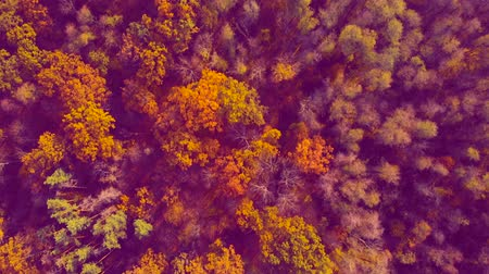 Autumn colored forest. Acid tint with purple shades. Nature pollution concept. Stock Footage