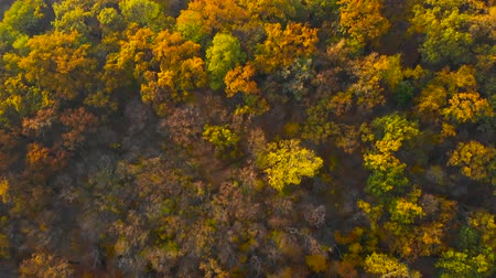 Autumn color forest. Autumn Landscape View of the Autumn Bright Multi-colored Trees, Green, Orange and Reddish Tint. Autumn in Forest, Aerial Top View Look Down Sunny Day. During Golden Autumn Season.