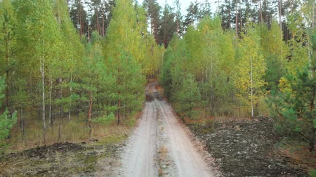 preservation : Move back along a forest road between small birches. A dirt road leads into the forest. Seedlings near tall conifers. Camera movement back along a forest road among the trees in autumn time.