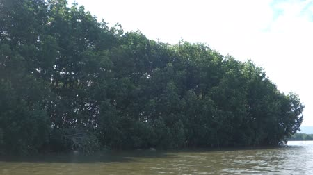 powódź : mangrove forest trees in thailand Wideo