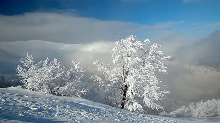 enevoado : Landscape with winter trees, snowy mountains and clouds Vídeos