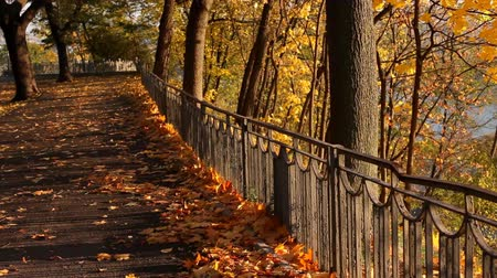 herbst landschaft : Autumn park Videos