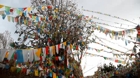 tybet : Tibetan Flags on the tree Wideo